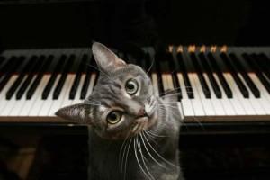 pianocat-480x320